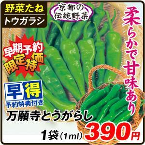 種 早得野菜たね トウガラシ 万願寺とうがらし 1袋(3ml) /送料グループ【早得たね】 kokkaen