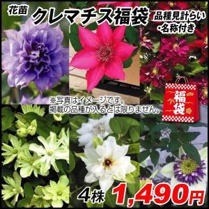 花苗 クレマチス福袋(品種見計らい・名称付き) 4株 / はななえ 花の苗
