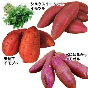 イモヅル お買得銘品イモヅルセット 3種30本 / さつまいも苗 サツマイモ苗 薩摩芋|kokkaen