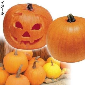 種 野菜たね カボチャ ハローウィーン 1袋(5粒) / 野菜の種 南瓜 かぼちゃ なんきん 国華園...