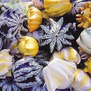 花たね 種 おもちゃかぼちゃ テンコマンドメンツ 1袋(5粒) / おもちゃ南瓜 オーナメント ハロ...