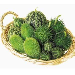 花たね 種 おもちゃメロン(ククミス) 1袋(10mg) / おもちゃ南瓜 オーナメント ハロウィン...