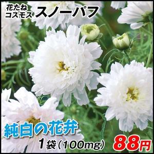 花たね コスモス スノーパフ 1袋(100mg) / タネ 種