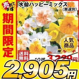 スイセン 球根 水仙ハッピーミックス (無選別) 40球 送料無料