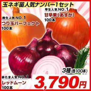 玉ねぎ苗 玉葱苗人気ナンバー1セット 3種300本 送料無料|kokkaen