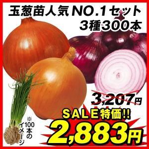 玉ねぎ苗 玉葱苗人気ナンバー1セット 3種300本