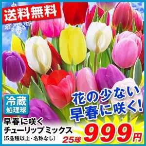 球根 早春に咲くチューリップミックス 25球(5品種以上・名称なし) 送料無料