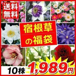 花苗 宿根草の福袋 10株 送料無料