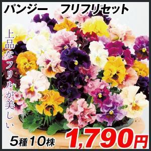 花苗 パンジー フリフリセット 5種10株 / はななえ 花の苗 国華園