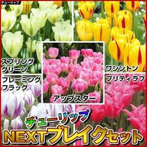チューリップ 球根 NEXTブレイクセット 5種100球 (各20球) / きゅうこん 花の球根 チュウリップ ちゅうりっぷ 国華園|kokkaen