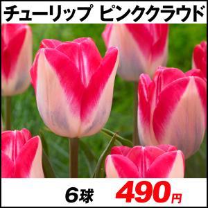 チューリップ 球根 ピンククラウド外 6球 / きゅうこん 花の球根 チュウリップ ちゅうりっぷ 国華園|kokkaen