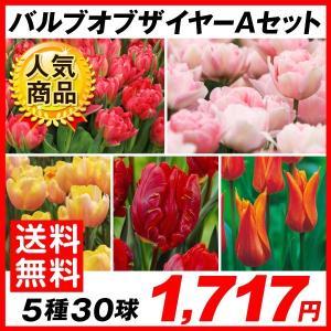 チューリップ 球根 バルブオブザイヤーAセット 5種30球 (各6球) 送料無料 / きゅうこん 花の球根 チュウリップ ちゅうりっぷ