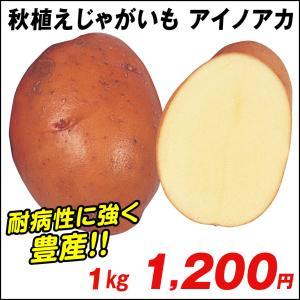 秋植えじゃがいも 種芋 種いも アイノアカ 1kg / ジャガイモ じゃが芋 馬鈴薯 ばれいしょ 種じゃが 国華園