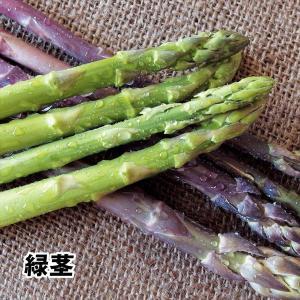 有用植物苗 アスパラガス 大株 ウェルカム 4株 / 国華園|kokkaen