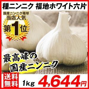 ニンニク 種球 福地ホワイト六片 1kg 送料込み / にんにく 種ニンニク 大蒜 たね タネ 球根 ガーリック