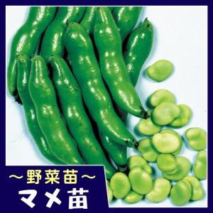 商品情報 3粒莢が多く、粒揃いの上物率が高い豊産性品種! 粉質で甘味たっぷりと食味抜群!莢は緑色で病...