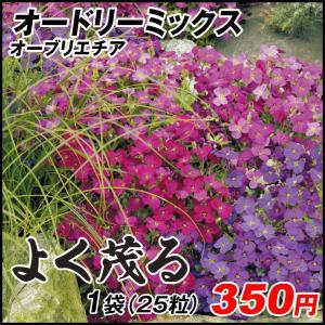 種 花たね オーブリエチア オードリーミックス 1袋(25粒) / 花種 花の種 はなたね アウブリエチア