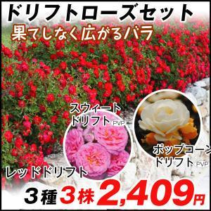 バラ苗 ドリフトローズセット 3種3株|kokkaen