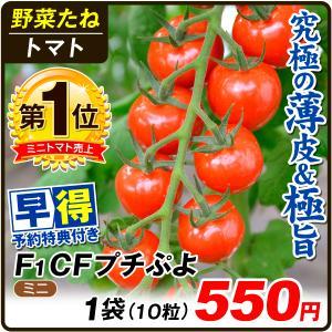 種 早得野菜たね ミニトマト F1 CFプチぷよ 1袋(10粒) /送料グループ【早得たね】 kokkaen