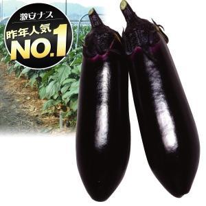 野菜たね 種 ナス F1中長茄子 1袋(1ml) / 野菜のたね 種 国華園