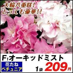 種 花たね ペチュニア ダブルカスケードF1 オーキッドミスト 1袋(25粒) / タネ 種 ツクバ...