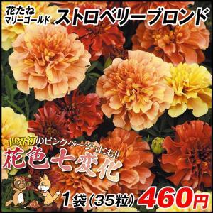 種 花たね マリーゴールド ストロベリーブロンド 1袋(35粒) / タネ 種 タゲテス 花壇 園芸...
