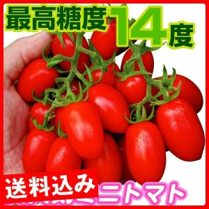 種 野菜たね トマト F1豊産あま娘 1袋(10粒) / 野菜の種 ミニトマト 送料込み企画