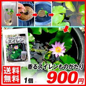 水生植物球根 香るスイレンものがたり 1セット