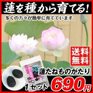 水生植物タネ 蓮たねものがたり 1セット 送料無料