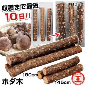 有用植物苗 しいたけ 完熟ホダ木 ホダキングしいたけ 45cm 1本 / 国華園|kokkaen