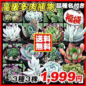 [送料無料] 多肉植物 高級品種福袋 3種3株 (7.5cmセラアートポット・品種見計らい・名称付) kokkaen