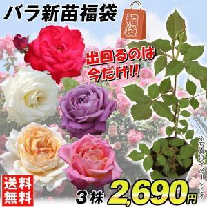 バラ苗 バラの新苗福袋 3株 送料無料|kokkaen