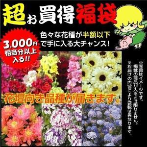 種 花たね 夏花壇向き花種福袋 15袋送料無料
