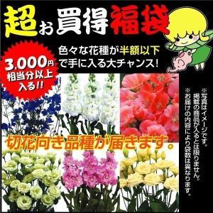種 花たね 切花向き花種福袋 15袋送料無料