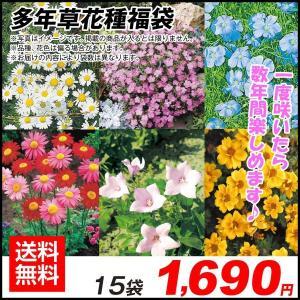 種 花たね 多年草花種福袋 15袋送料無料