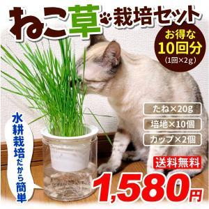 猫草 水耕栽培 ねこ草 栽培セット(10回分)種20g・ジフィ10個・容器2個 ペットのおやつ 猫 犬 キャット にゃん ベジ 草 set 国華園の画像