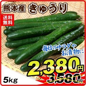 熊本産 きゅうり(5kg)ご家庭用 野菜 国華園|kokkaen