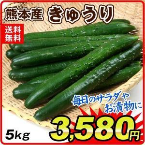 熊本産 お買得きゅうり 5kg 1箱|kokkaen