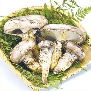 野菜 石川産 モミタケ (白松茸) 約300g1箱 きのこ 国華園|kokkaen