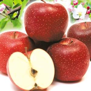 青森産 千雪りんご 5kg 1箱 国華園 りんご リンゴ|kokkaen