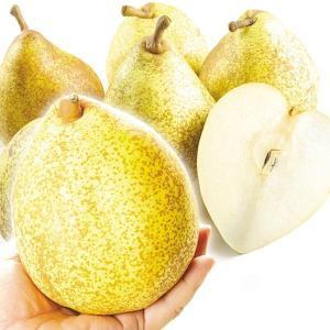 青森産 訳有ゼネラルレクラーク 約4kg 国華園 りんご リンゴ|kokkaen
