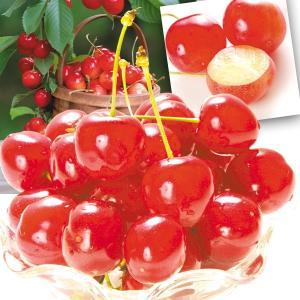 食品 山形産 品種おまかせ さくらんぼ 1kg 1組 さくらんぼ 国華園 kokkaen