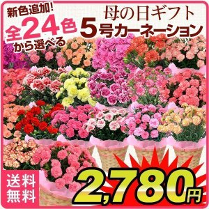 母の日 2018 送料無料 カーネーション 5号鉢 選べる1...