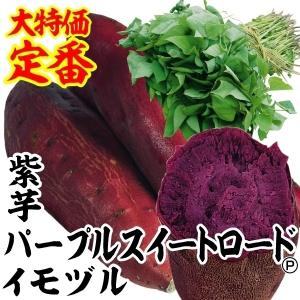 イモヅル(芋づる) パープルスイートロードPイモヅル 10本 / さつまいも苗 サツマイモ苗 薩摩芋|kokkaen