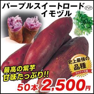 イモヅル(芋づる) パープルスイートロードPイモヅル 50本 / さつまいも苗 サツマイモ苗 薩摩芋|kokkaen