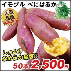 イモヅル(芋づる) べにはるかPイモヅル 50本 / さつまいも苗 サツマイモ苗 薩摩芋|kokkaen