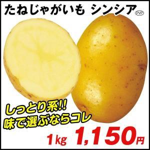 じゃがいも種芋 シンシアP 1kg / ジャガイモ 馬鈴薯 たね芋 たねいも