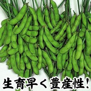 野菜たね 枝豆 夏みどり 1袋(50ml)|kokkaen