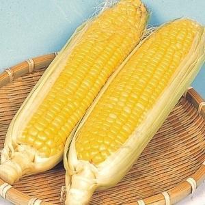 野菜たね トウモロコシ 早生スイートコーン 1袋(20ml) / 種 タネ kokkaen