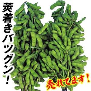 野菜たね 枝豆 白鳥枝豆 1袋(40ml) / 種 タネ kokkaen